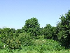 Land at rear